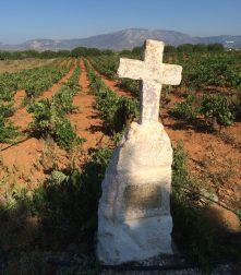 Savatiano vines (photo: E. Lebel/oenopole)